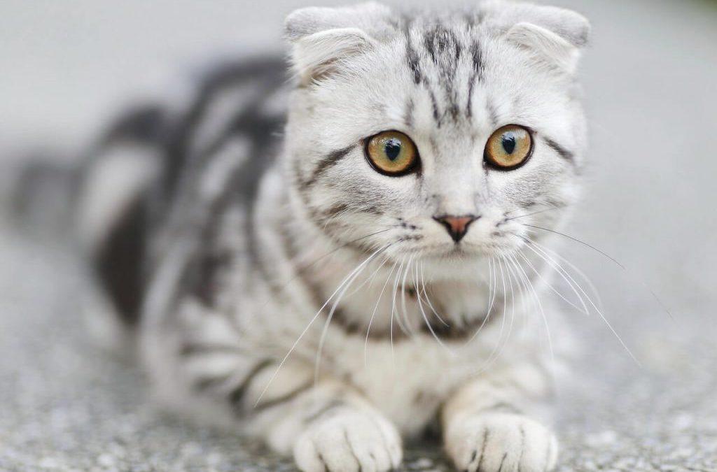 4 Tips voor het Verhuizen van uw Katten – Holland Movers